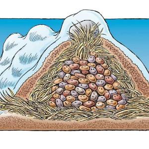 hranenie-ovoshhej-zimoj-5