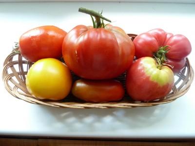 плоды помидор в корзинке