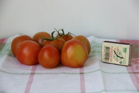 томаты сорта Бетта
