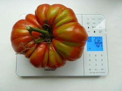 томат сорта Шунтукский великан