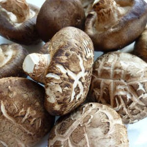 грибы шииитаке