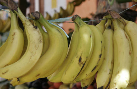 Применение банановой кожуры для огорода как удобрения