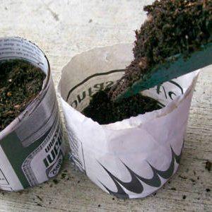 почва для рассады в стаканчиках