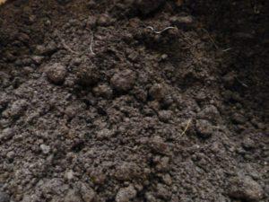 как обеззаразить почву для рассады