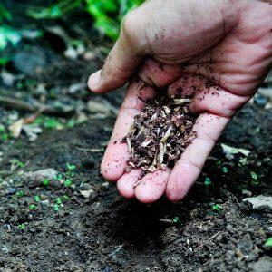 внесение костной муки в почву