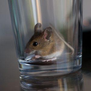 мышь в стакане