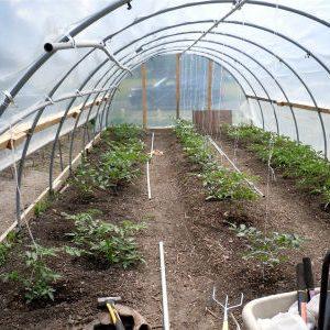 почва для томатов в теплице