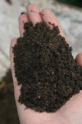 почва для рассады в руке