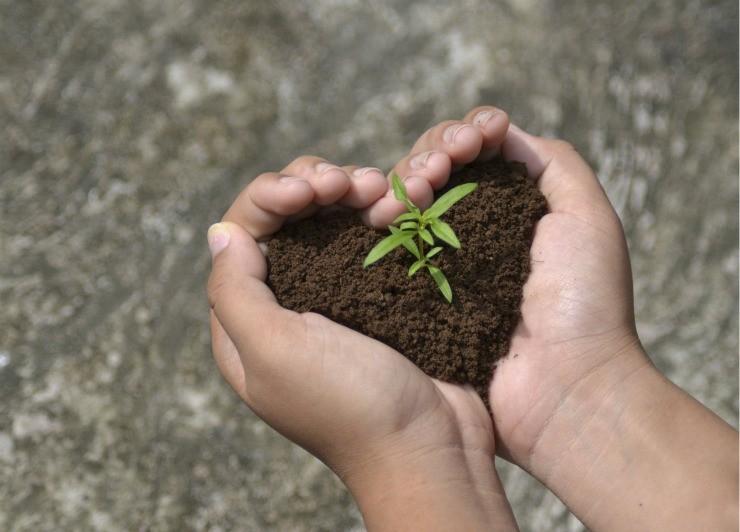 почва с ростком в руках сердечком