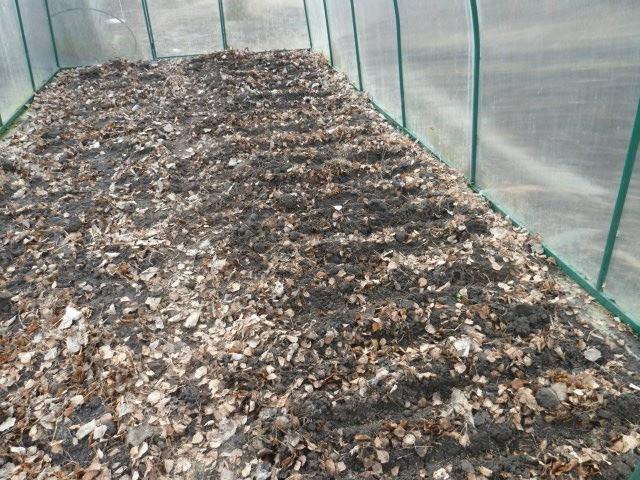 берёзовые листья в теплице