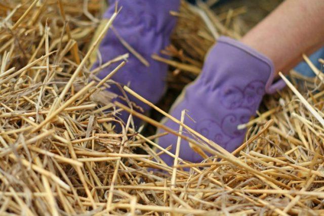 посадка картошки в солому
