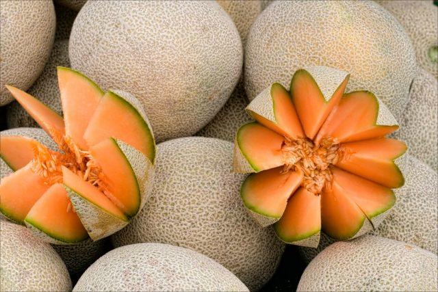 урожай плодов дыни