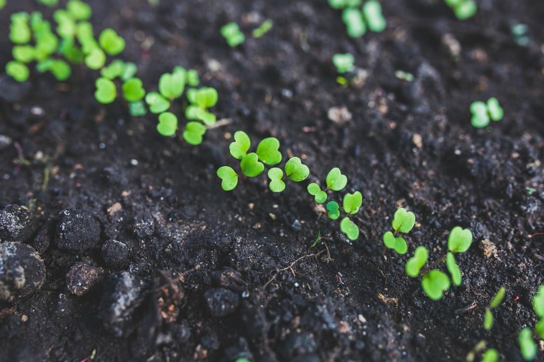 Подготовка почвы для рассады цветов