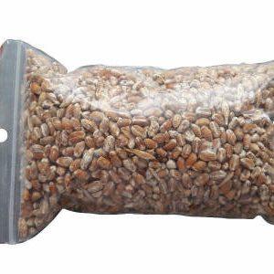 зерновой мицелий вешенки