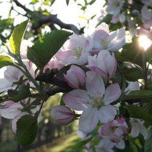 борьба с вредителями в саду весной