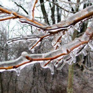 обрезка подмерзших деревьвев