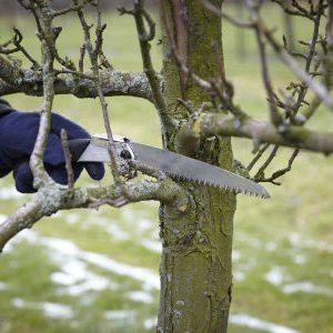 обрезка дерева в марте