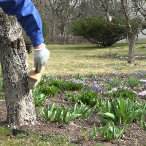 побелка дерева в марте