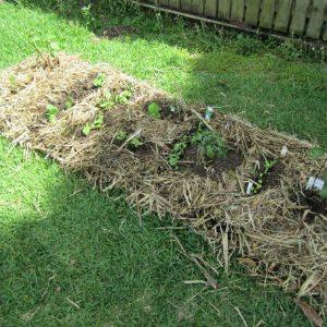 выращивание овощей под деревьями