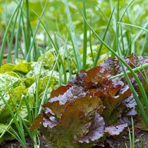 выращивание овощей на маленьком участке