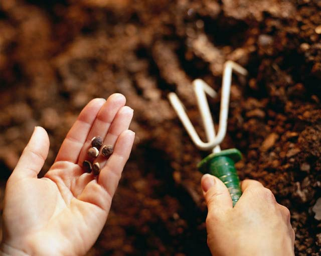 как сеять семена