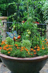 выращивание томатов в вёдрах
