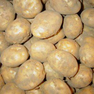 вкус картофеля от чего он зависит