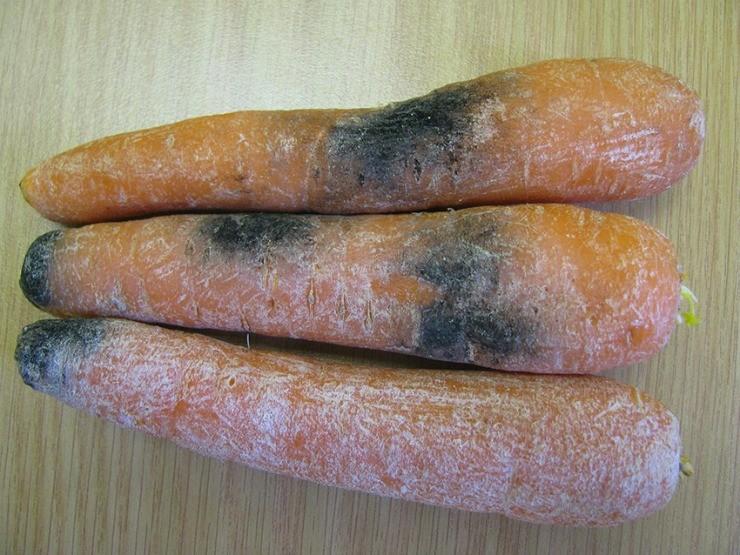 морковь начинает гнить