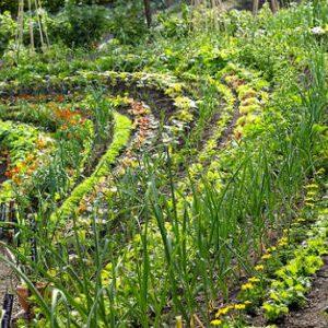 как получить два урожая за сезон