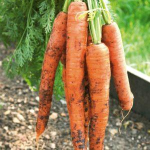 Хранение овощей... на грядке