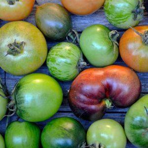 томаты на дозаривании
