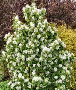 Три лучших дерева для посадки в маленьком саду