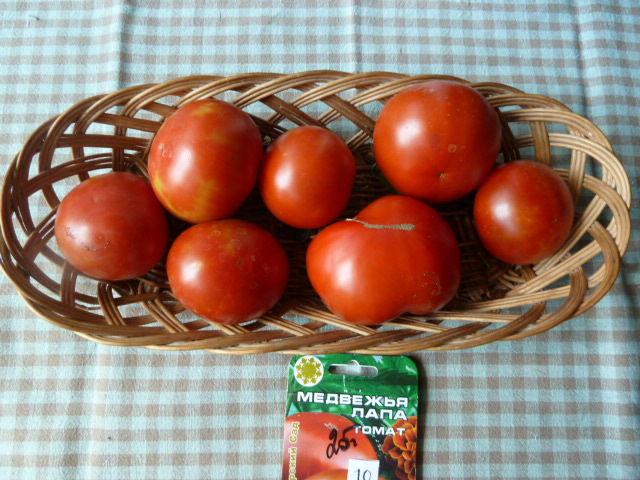 сорт томатов Медвежья лапа