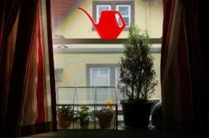 переувлажнение домашних растений