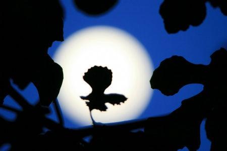 растения в лунном свете
