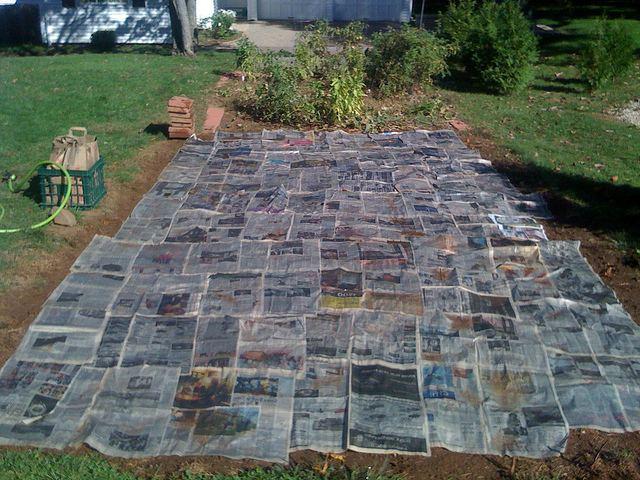 мульчированная газетами грядка