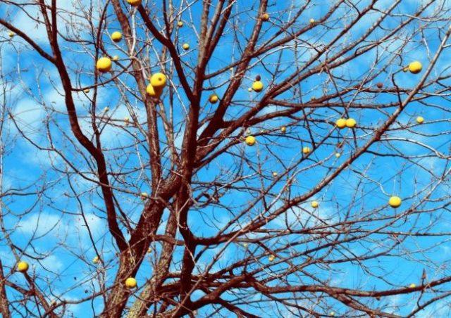 дерево яблоня осенью