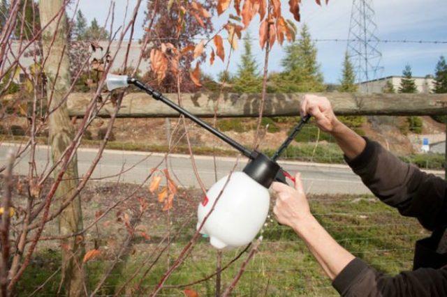 осенняя обработка деревьев в саду