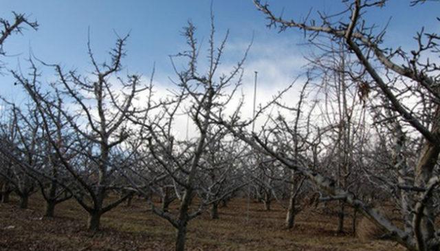 садовые деревья весной