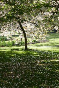 опрыскивание садовых деревьев весной