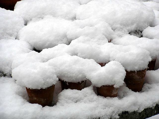 покрытые снегом горшки