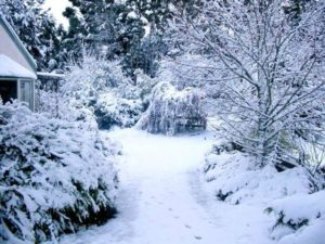 Что делать со снегом на участке