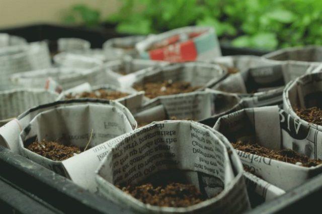 стаканчики для рассады из газет