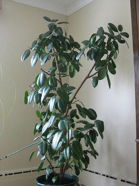 5 лучших растений для офиса