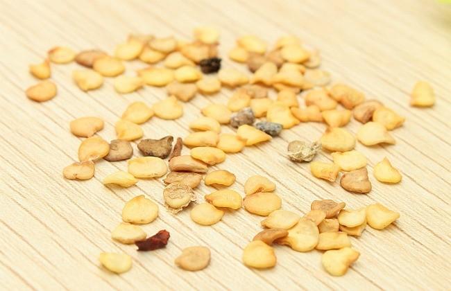 семена острого перца
