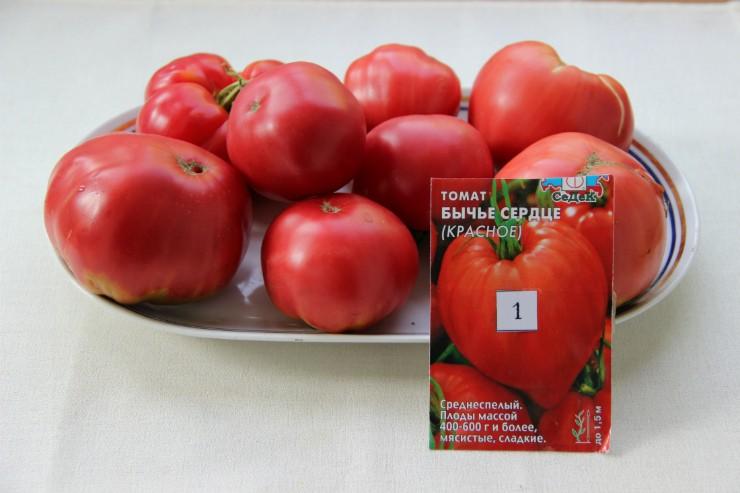 томат сорта Бычье сердце