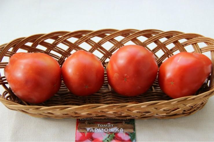 сорт томатов Гармошка