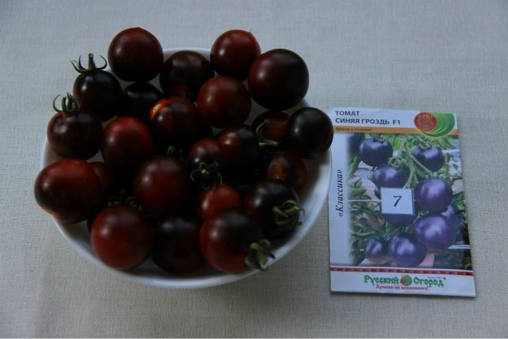 томат сорта Синяя гроздь