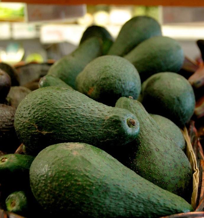 авокадо сорта Пинкертон