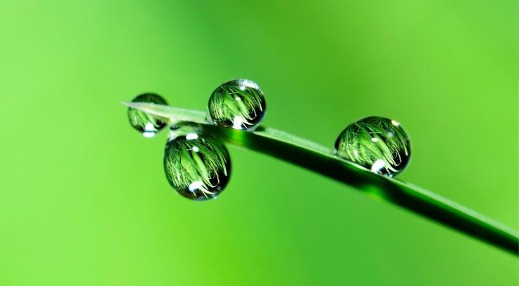 капли воды на листе